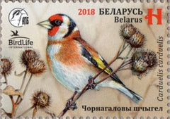 Belarus - 2018 Bird of the Year: European Goldfinch, Single (MNH)