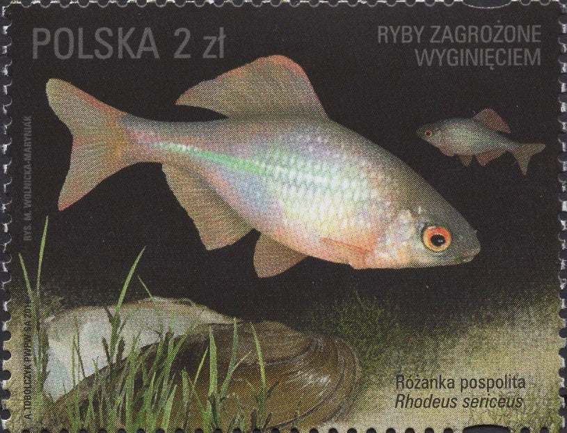 #4245-4248 Poland - 2016 Fishes Threatened by Extinction, Set of 4 (MNH)