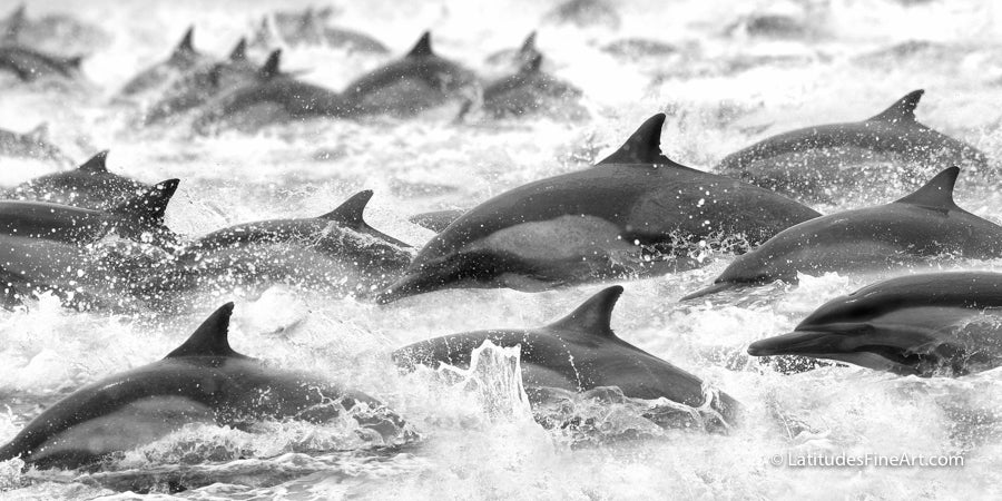 Dolphins on the Run