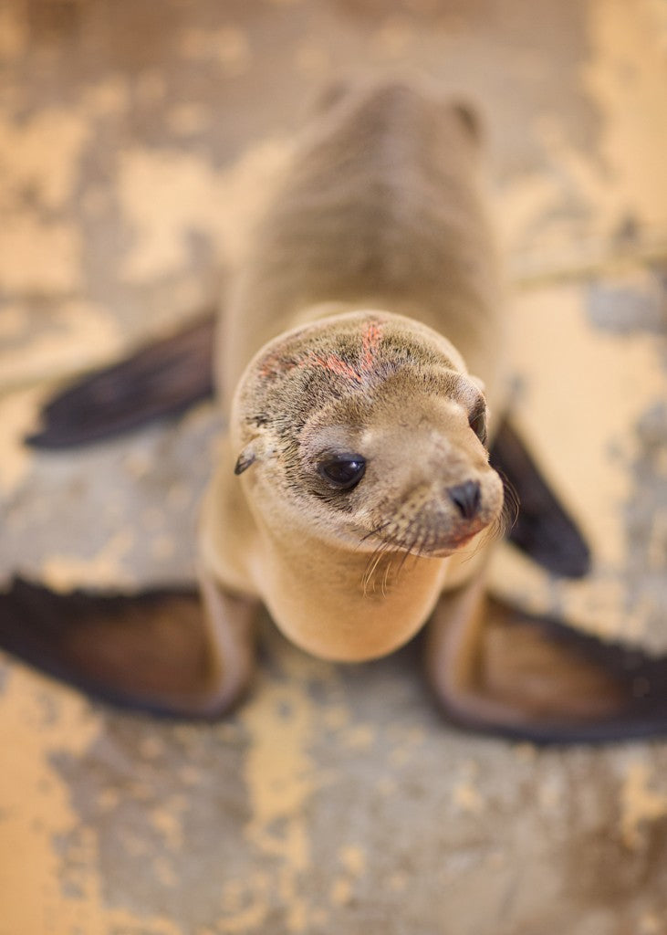 Sea Lion Pup #13