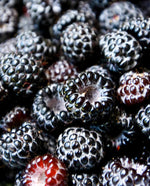 Boysenberry Extract - Water Soluble Hard Oil