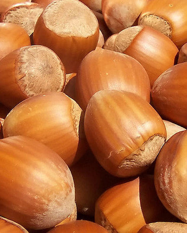 Hazelnut Oil WS