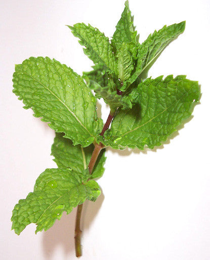 Spearmint Oil W.S.