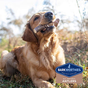 Barkworthies Split Elk Antler Dog Chew for Extra Large Breed Dogs