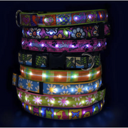 LED Patterned Collars