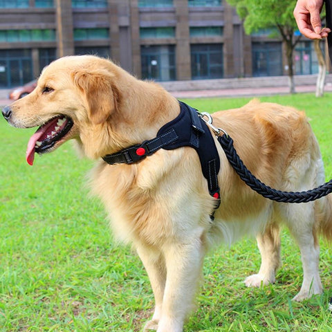 Colorful Reflective Dog Harness Leash Set