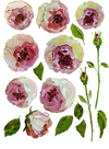 Painterly Floral Transfer - New Format!