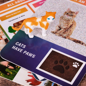 Close up of abstract identification card with cat