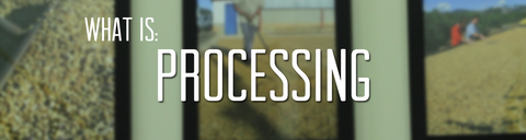Coffee Processing Information