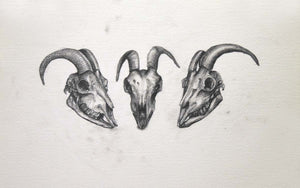 3 detailed skulls drawn  centered on white page