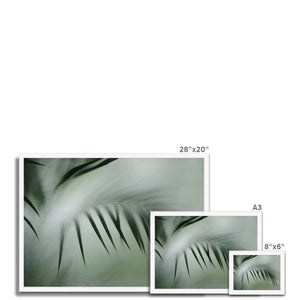 'Palm etch 4' by Michael Banks Framed Print