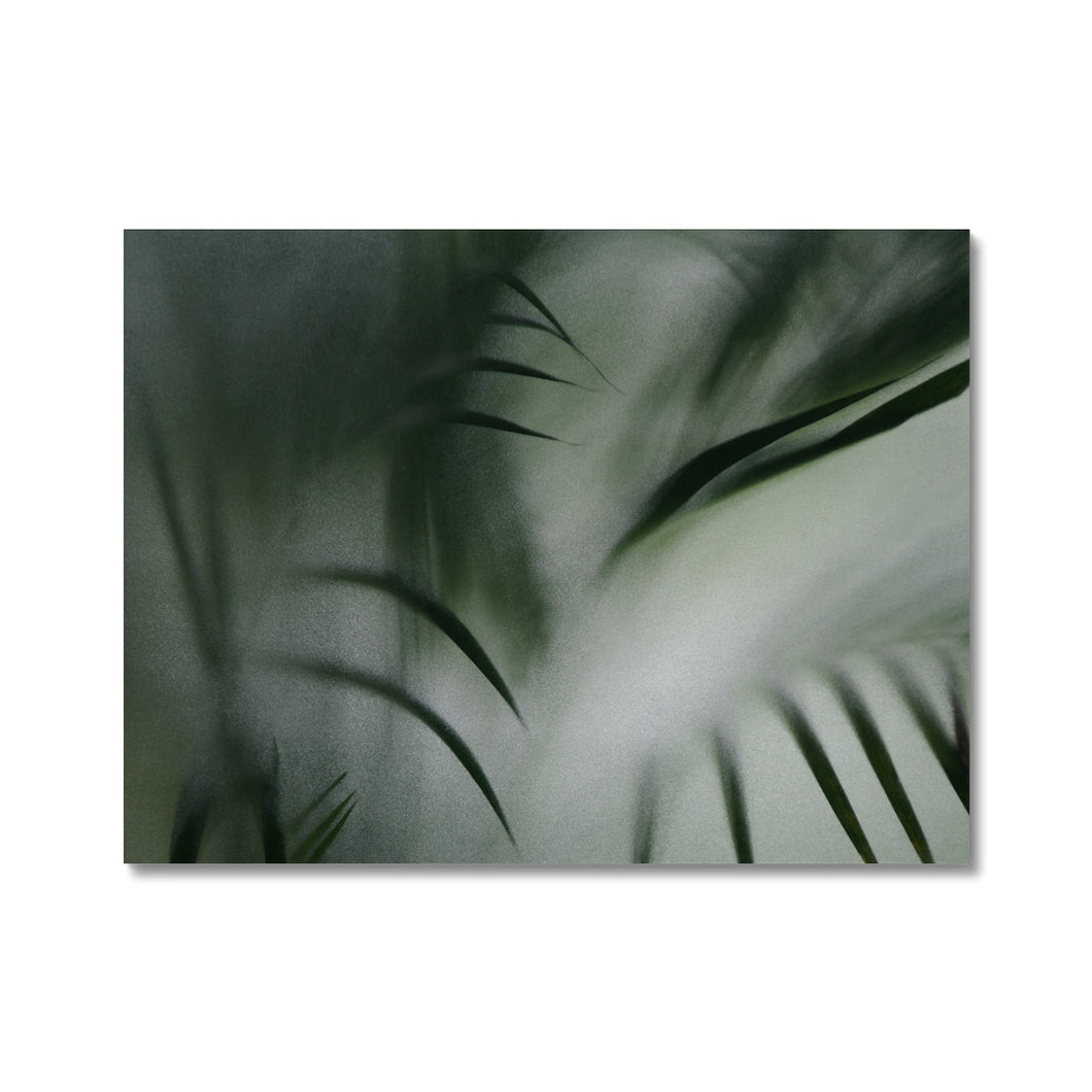 'Palm etch 2' by Michael Banks Canvas