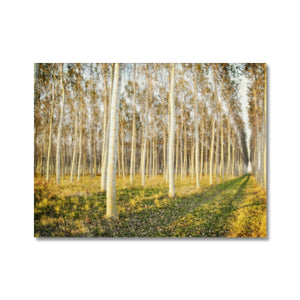 'Trees Texture 3' by Michael Banks Canvas