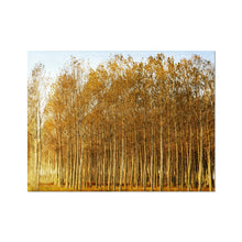 Load image into Gallery viewer, 'Trees Texture 1' by Michael Banks Fine Art Print