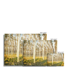 Load image into Gallery viewer, 'Trees Texture 3' by Michael Banks Fine Art Print