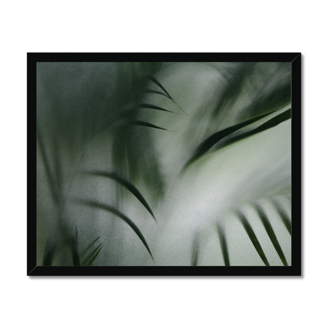 'Palm etch 2' by Michael Banks Framed Print