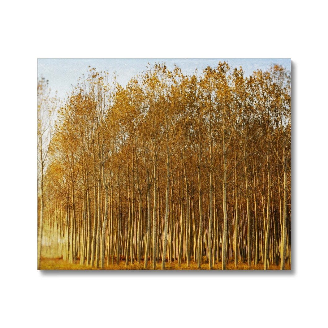 'Trees Texture 1' by Michael Banks Canvas