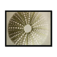 Load image into Gallery viewer, 'Seashell 4' by Michael Banks Framed Print