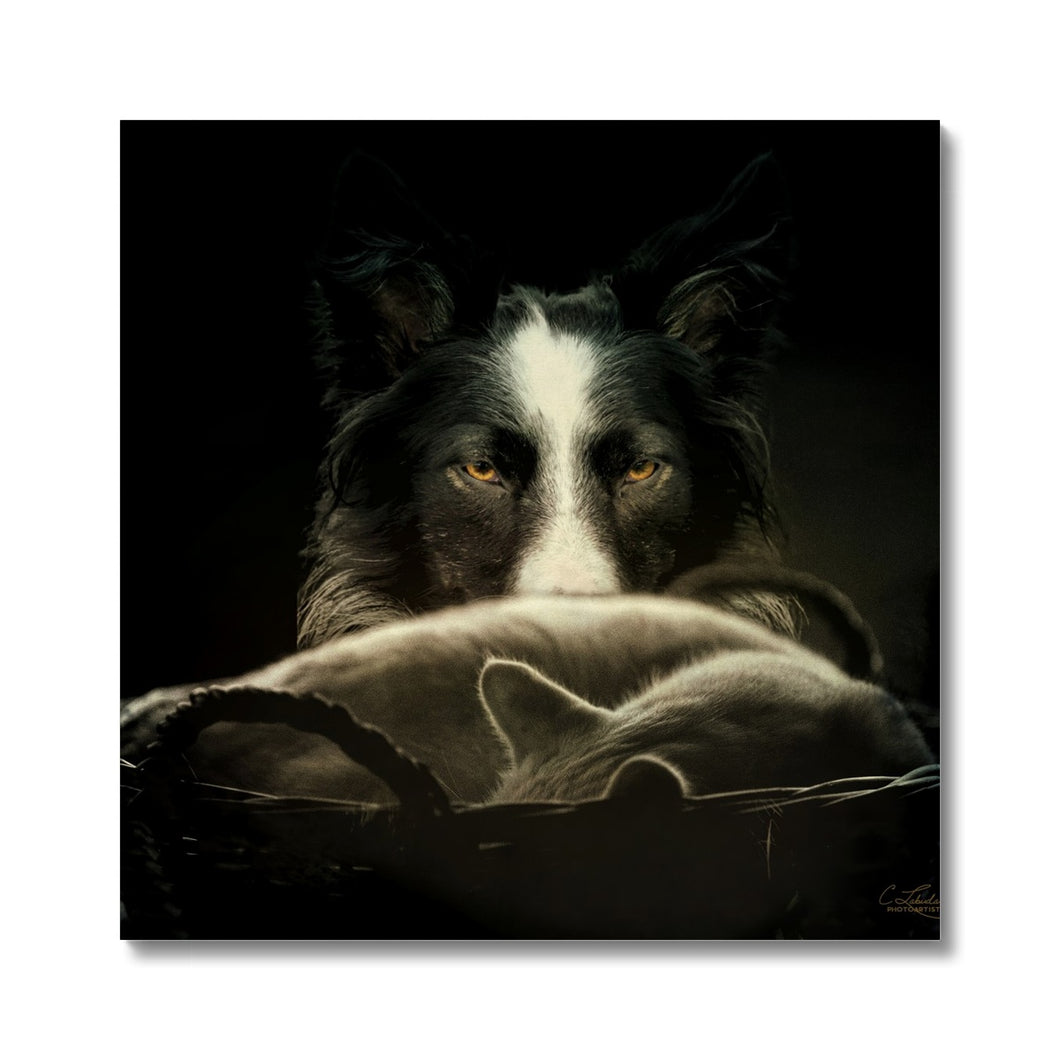 Calm Before The Storm | Animal Digital Art Pictures | MGallery, MGallery is the best way to find the Animal Digital Art Pictures for decorating your bedroom. We have a beautiful collection of Bedroom Digital Animal Wall Art, Buy now!-mgallery