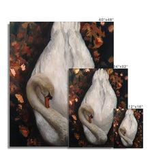 Load image into Gallery viewer, Sleeping Swan | Swan Wall Art Print | MGallery, Shop Swan Wall Art Prints at MGallery! Decorate your walls with High Quality Animal Artwork prints. Fast Worldwide Delivery Available! -mgallery