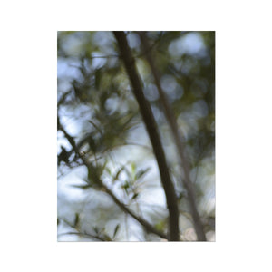 'Ethereal Nature 2' by Michael Banks Fine Art Print