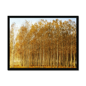 'Trees Texture 1' by Michael Banks Framed Print