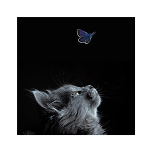 Butterflying | Digital Animal Art Online | MGallery, Buy Digital Animal Art Online! Add a beautiful style to your home with our Beautiful Portrait Animal Art, all at best prices and worldwide shipping!-mgallery