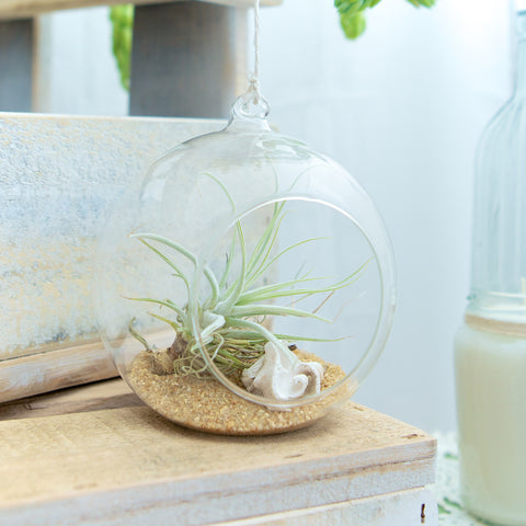 Coastal Air Plant Orb Terrarium from House of Botanica