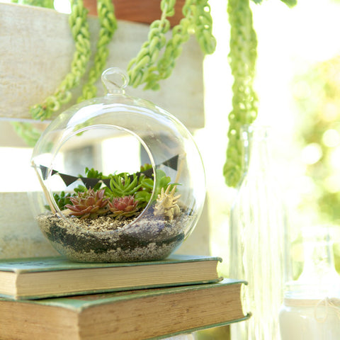 Dino Orb Terrarium by House of Botanica