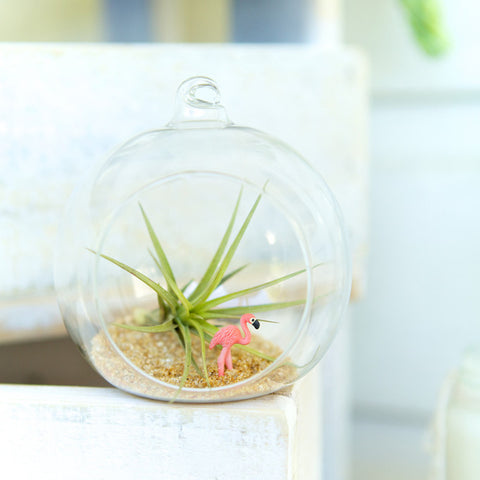 Flamingo Air Plant Orb Terrarium by House of Botanica