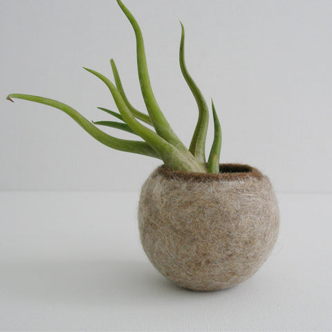 Llama Fur Air Planters - Champagne from Foxhill