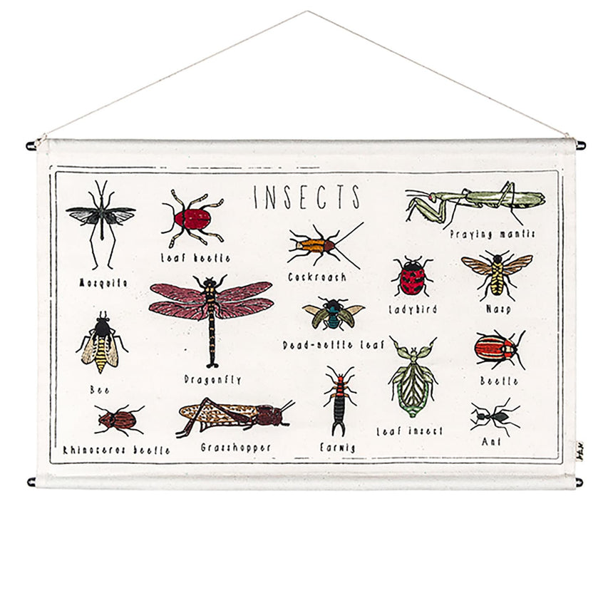 Numero 74 - School Poster Kit Insects - Natural-Multicolor - D117
