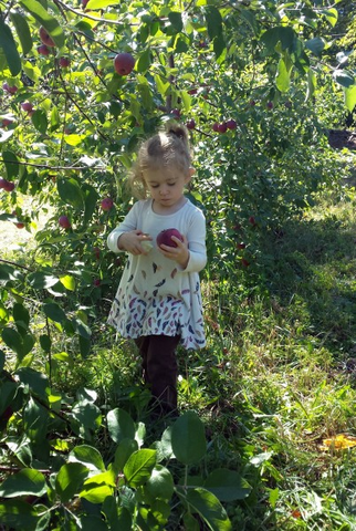 New England Applepicking