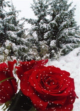 Load image into Gallery viewer, Frosted Rose Diamond Painting