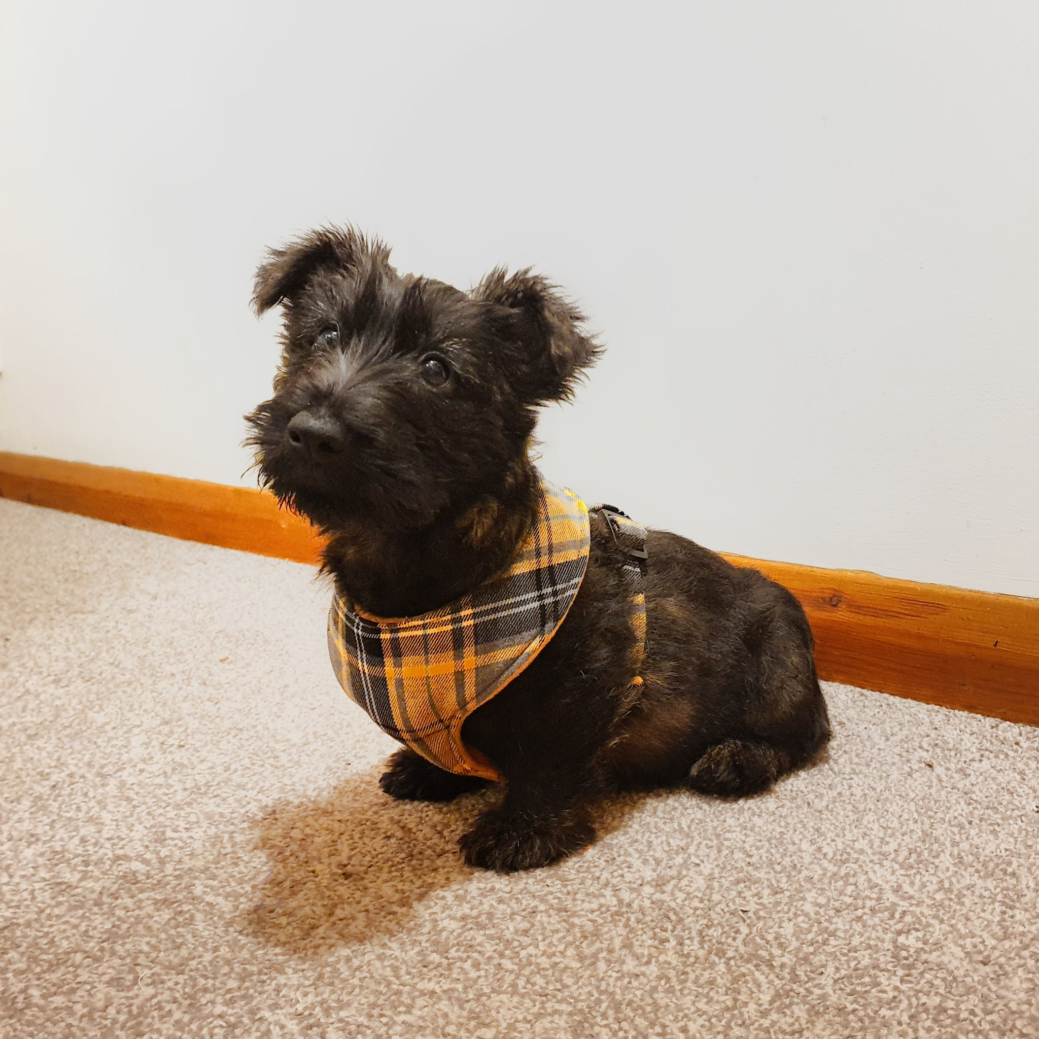 Yellow and Grey Tartan Vest Harness