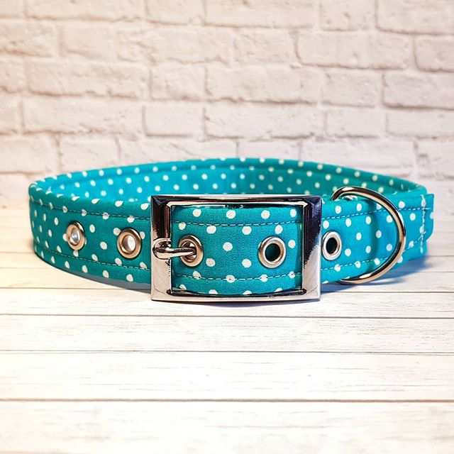 Turquoise Polka Dot Dog Collar