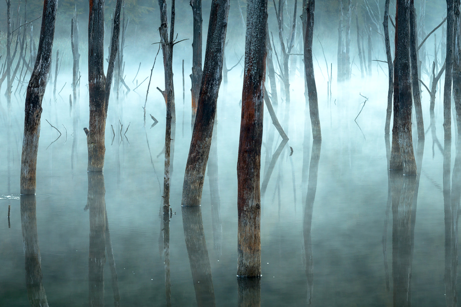 Foto Gheorghe Popa - Cold and misty, Lacul Cuejdel.