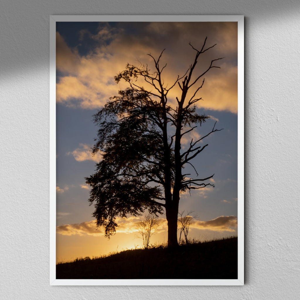 Tree In The Sunrise - Landscape Photography | Sunrise Photography | Tree Photography