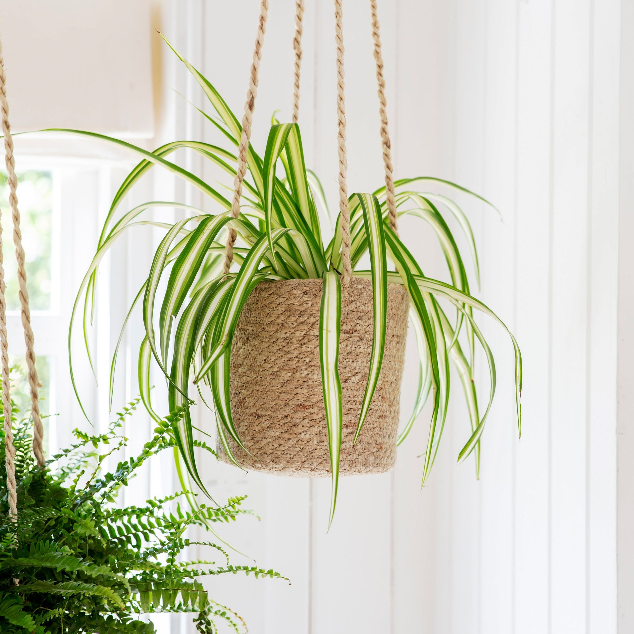 Jute Hanging Pot Range