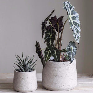 Tapered Plant Pot - Grey