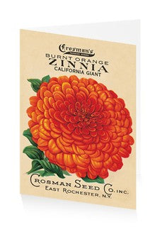 Card Orange Zinnia