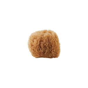 Caribbean Sea Sponge Natural