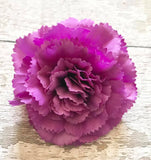 Forever Flowerz Majestic Carnations Refill Packs - makes approx 30 flowers