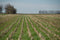 Cover Crops Make for Better Soil Nutrient Usage