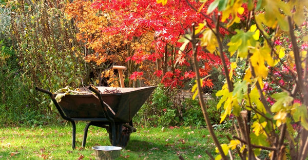 Get an Early Start to Fall Gardening