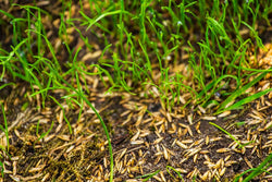 Overseeding is Key to Wet Pasture Recovery