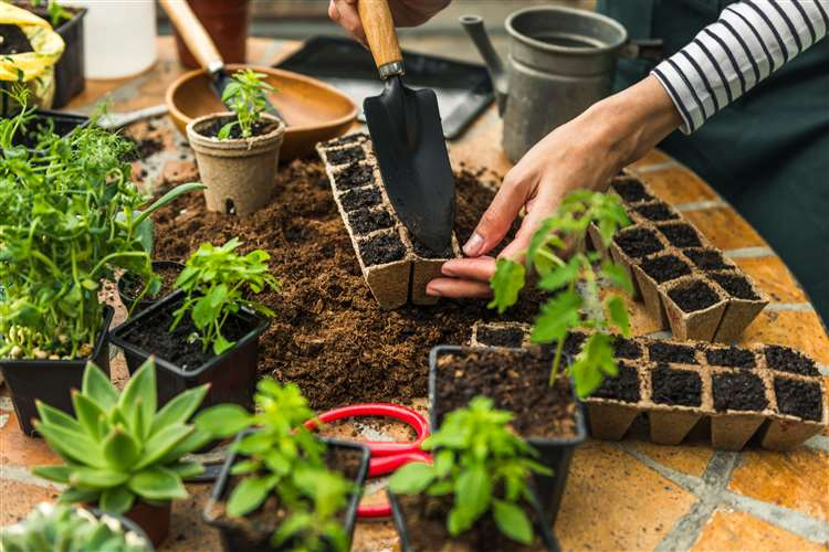 Herb Growing Is a Good Choice for Beginning Gardeners