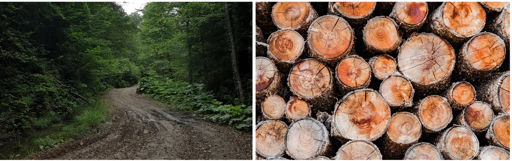 forestry road and pile of logs