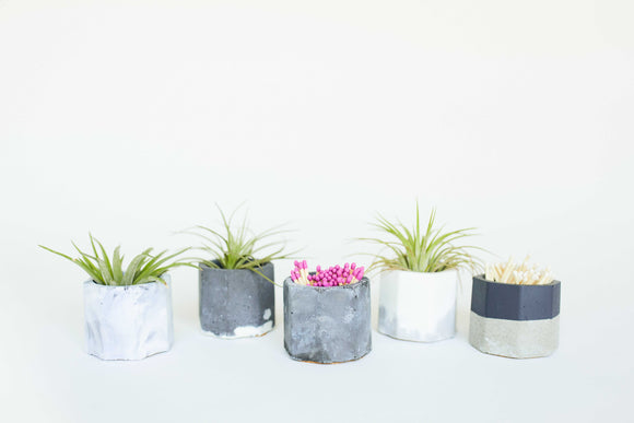 Concrete Air Plant Holder - The Updated Ones