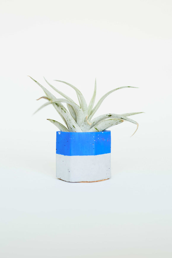 Painted Air Plant Holder - The Updated Ones
